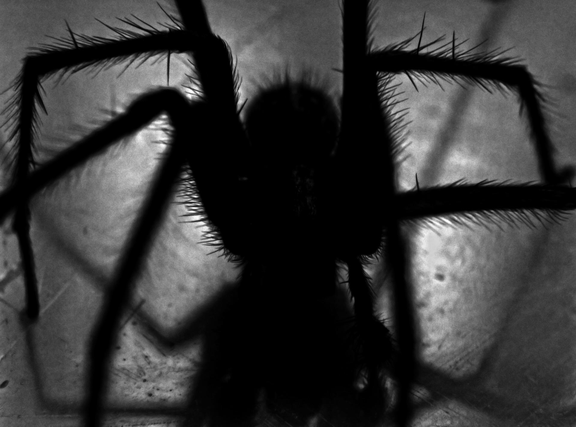Erstaunliche Spinne Mann Tod und Dating